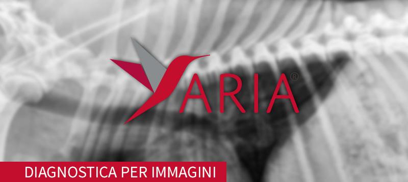 banner-aria